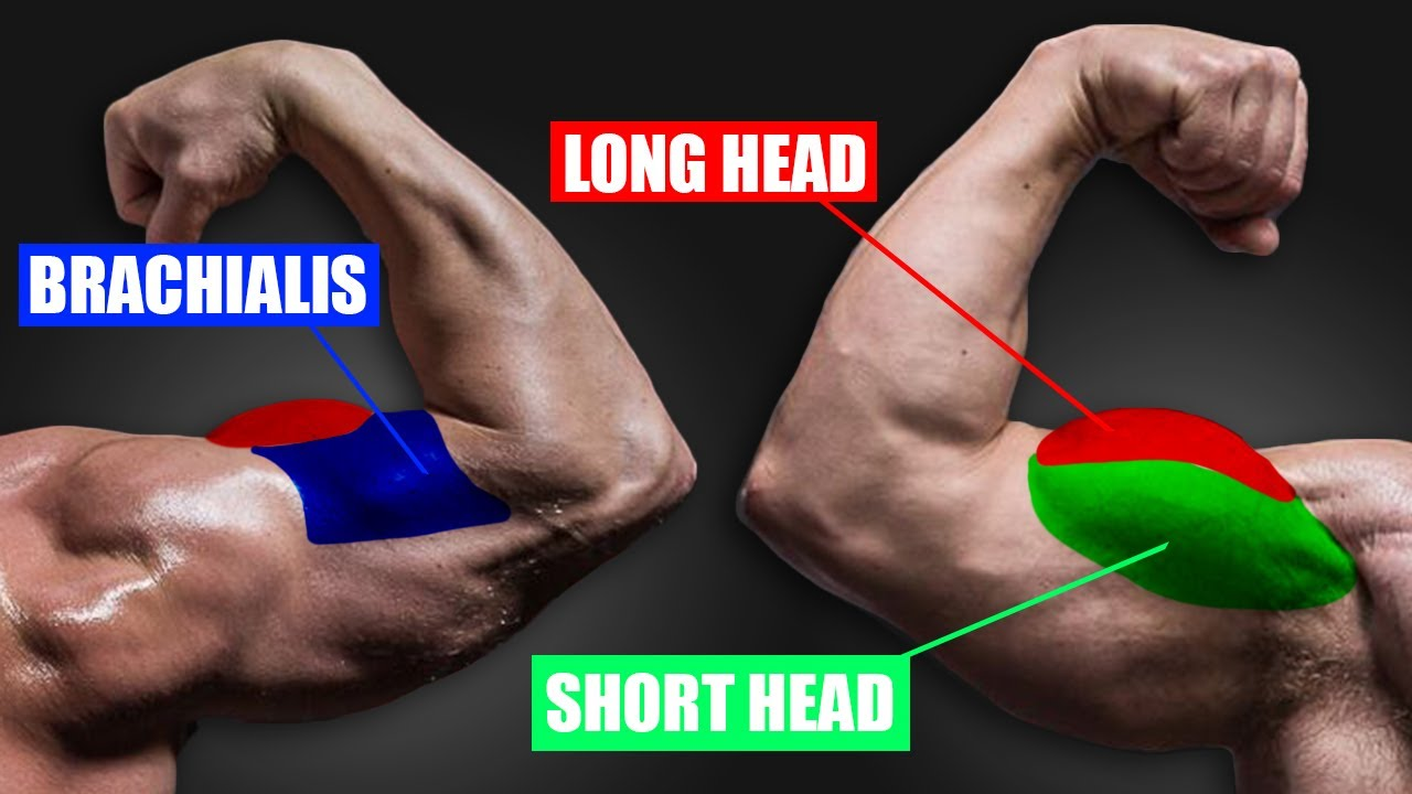 4 Simple Fixes for BICEP GROWTH!
