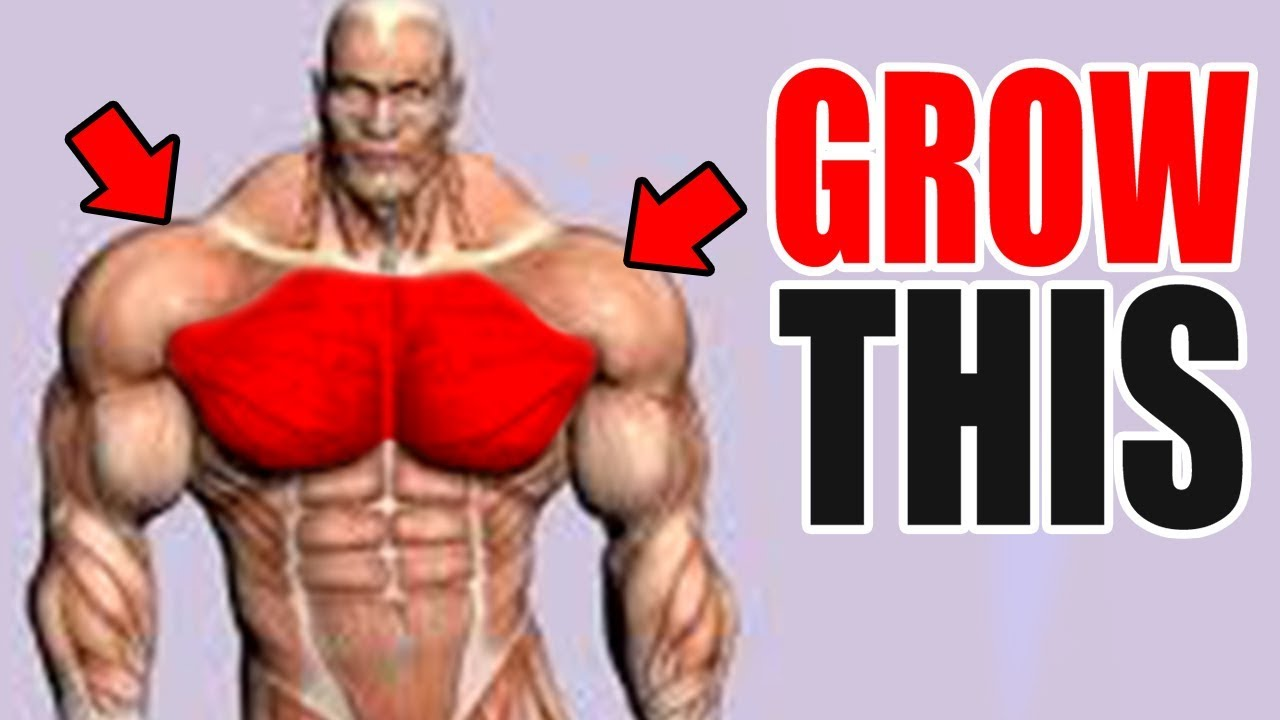 3 Best Exercises for a BIG CHEST!
