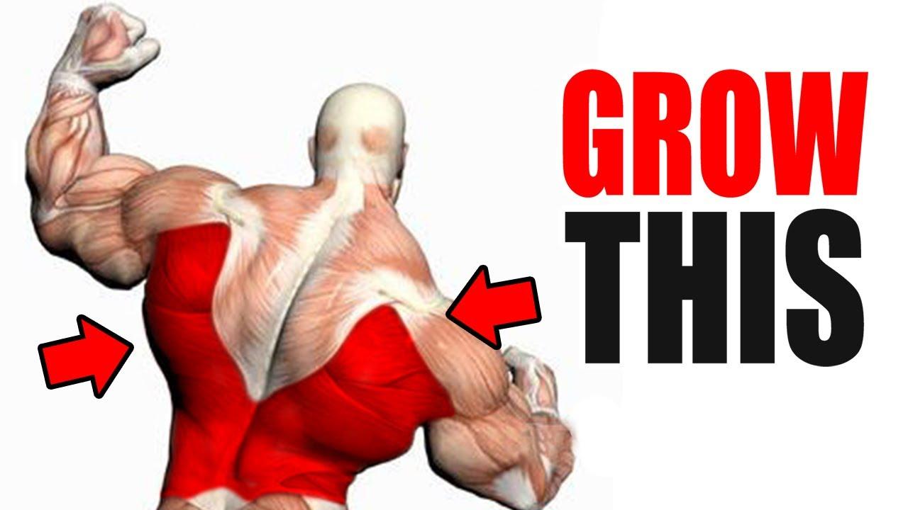 3 Best Exercises for a BIG BACK!