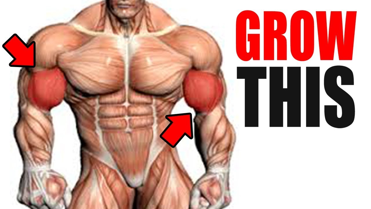 3 Best Exercises for BIG BICEPS!