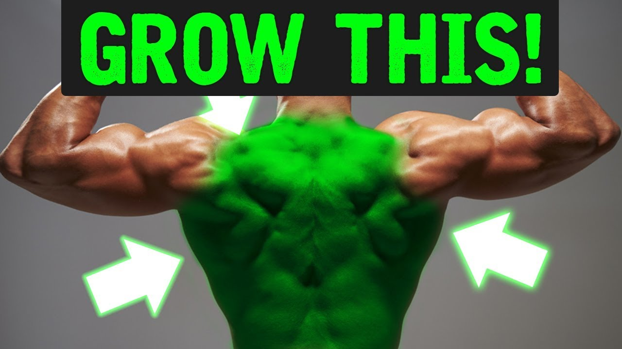 The BEST Exercises for Back Detail!