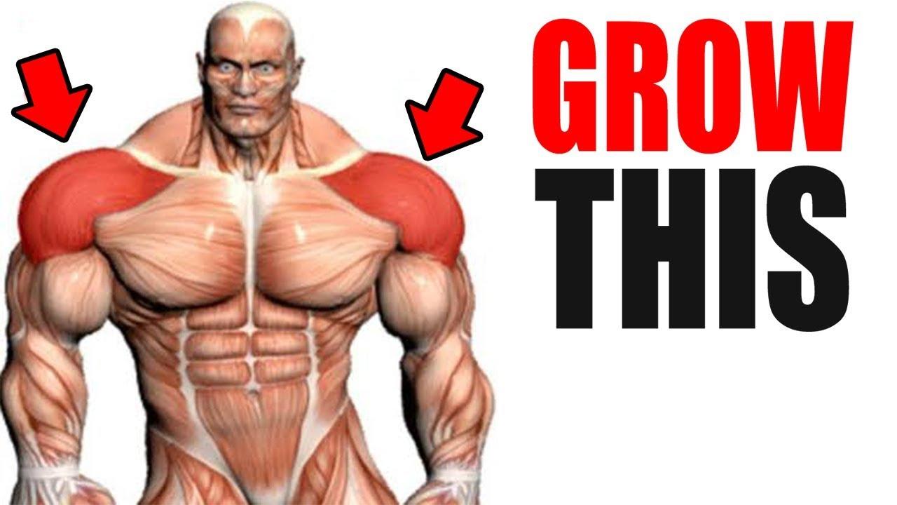 3 Best Exercises for BIG SHOULDERS!